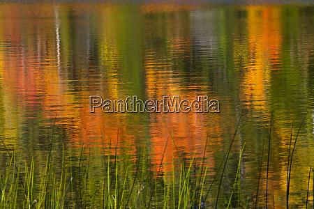 autumn reflections bubble pond acadia national