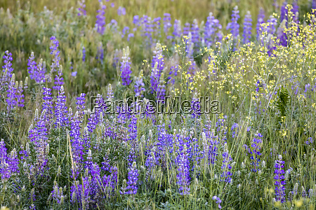 usa montana national bison range wildflowers