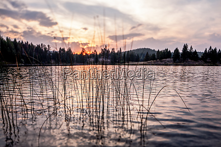 reeds and smooth lake at sunset