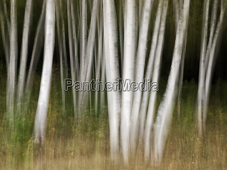 usa new hampshire white mountains white
