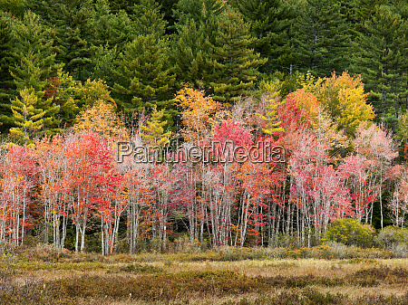 usa new hampshire white mountains young