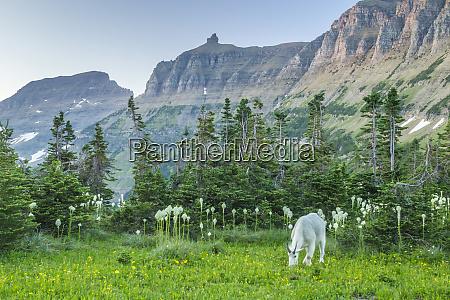 usa, , montana, , glacier, national, park., mountain - 27342552