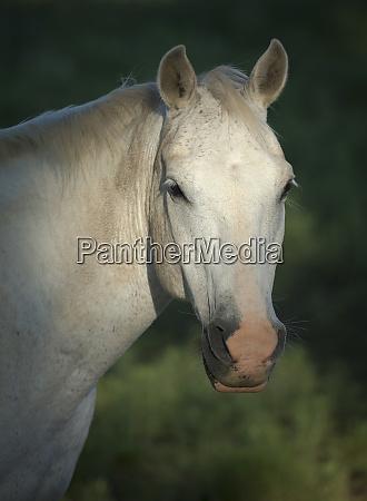 quarter horse philmont scout ranch cimarron