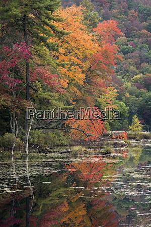 usa new york state autumn trees