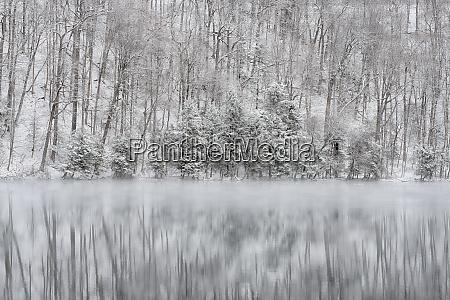 usa new york state winter trees