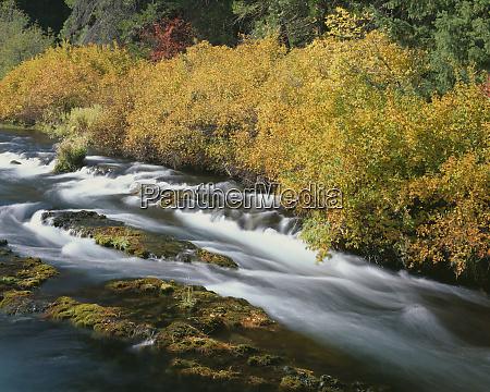 usa oregon deschutes national forest fall