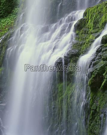 usa oregon willamette national forest three