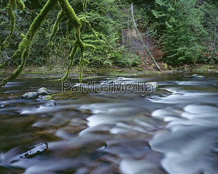 usa oregon mount hood national forest