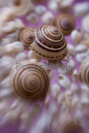 sea shells selective focus