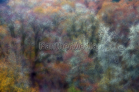 oak trees designs in autumn color