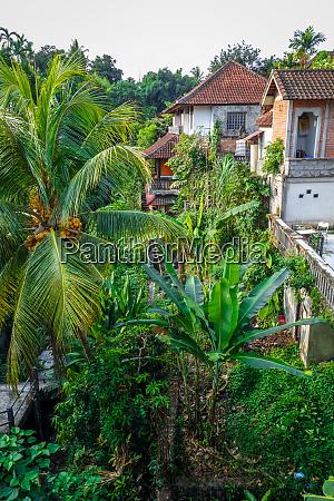 houses in jungle ubud bali indonesia