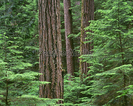 usa oregon willamette national forest middle
