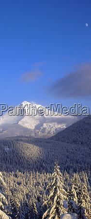 snow covered trees mt hood highest