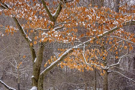 usa pennsylvania philadelphia snow on trees