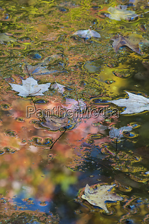 usa pennsylvania autumn reflections and colorful