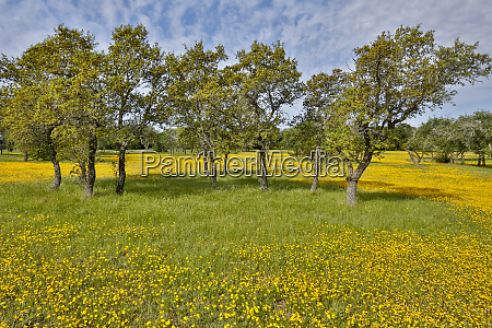 wildflowers in fields just south of