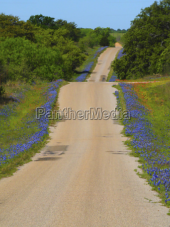 dirt road texas hill country lined