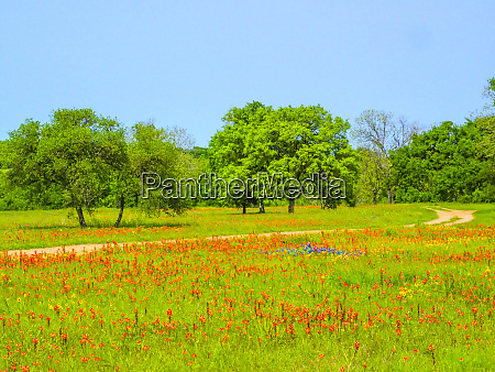 springtime wildflower field with dirt road