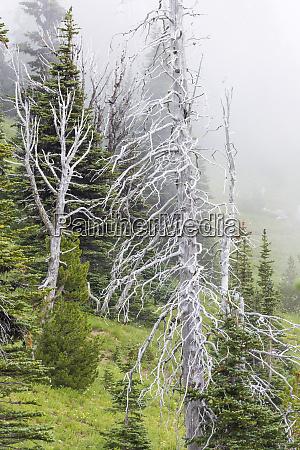 washington mount rainier national park dead