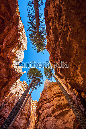 wall street bryce canyon national park