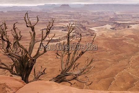 usa utah canyonlands national park white