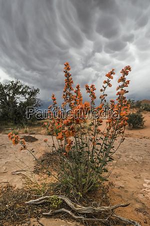 usa utah arches national park desert