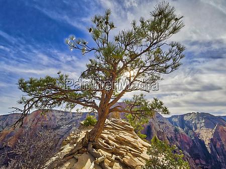 utah zion national park zion canyon