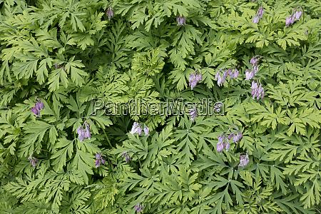 usa washington state bainbridge island flowers