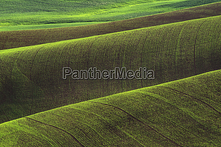 usa washington state palouse rolling wheat
