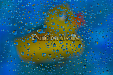 yellow rubber duck reflection in dew