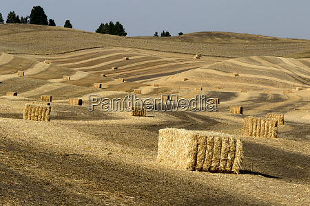 usa washington state palouse bales of