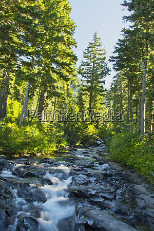 paradise river mount rainier national park