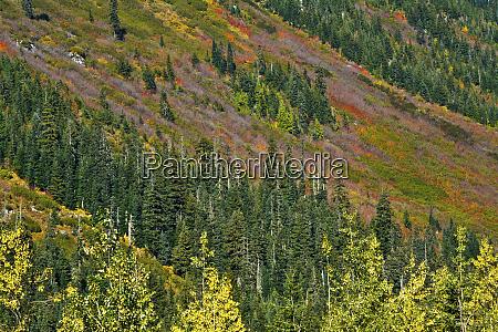 fall foliage stevens pass area washington
