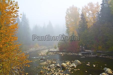 autumn nason creek in fog wenatchee