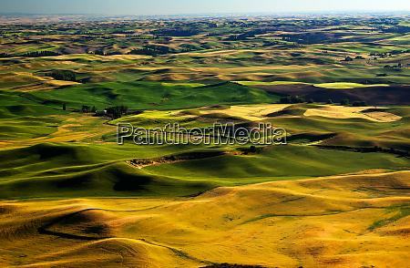 yellow green wheat fields roads and