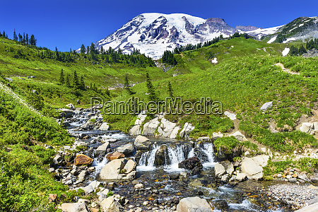 bistort wildflowers edith creek mount rainier
