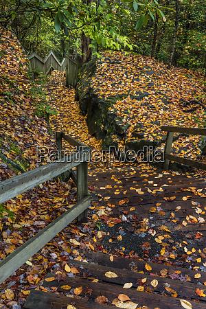 leaf strewn stairway in blackwater falls