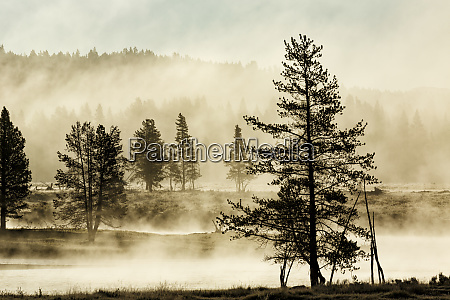 silhouetted trees along yellowstone river hayden