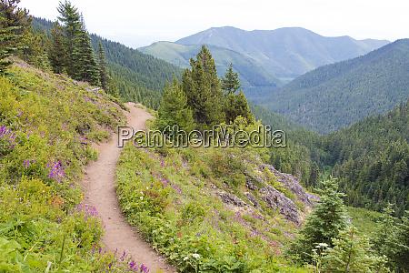 usa washington state wildflowers carpet hillsides