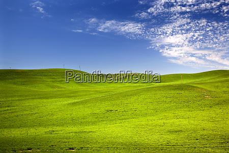 green wheat grass fields blue skies