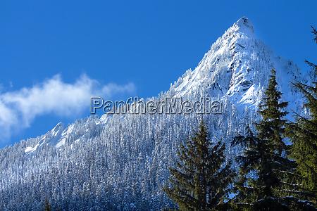 winter forest landscape with mcclellan butte