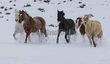 hideout ranch shell wyoming horse running