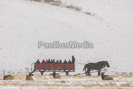 usa wyoming national elk refuge tourists