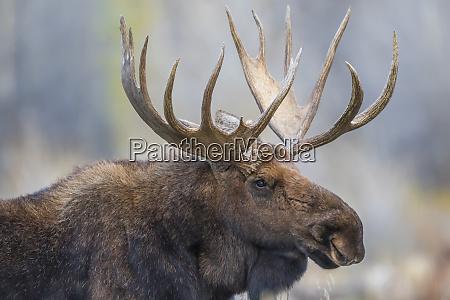 usa wyoming grand teton national park