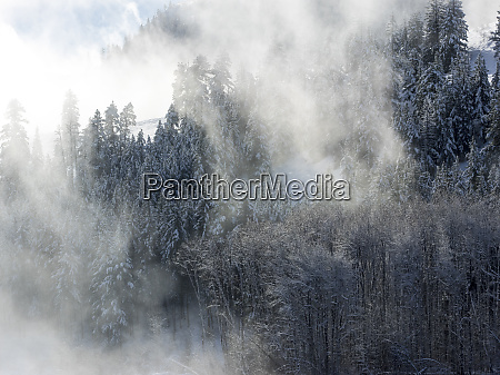 trees, in, fog, with, morning, light - 27348418