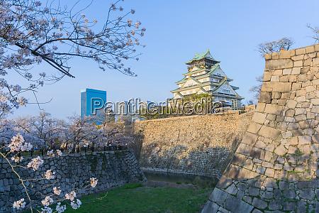osaka castle with sakura blooming
