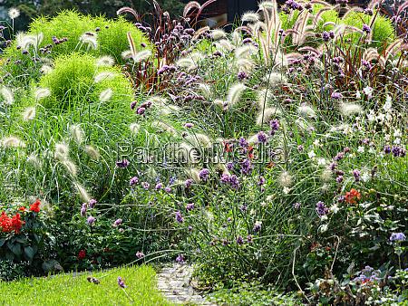 blossoming flowerbed in autumn flower garden