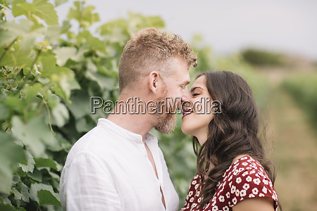 lovers in the vineyards
