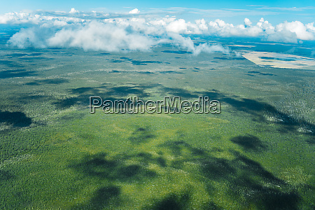 aerial view of forest and clouds