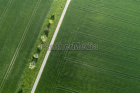 aerial view of treelined road through